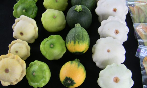 Winter or Summer? Choose Your Squash