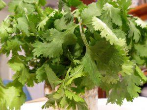 cilantro in glass