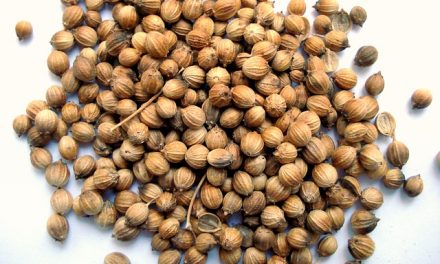 The Spice Road: Coriander