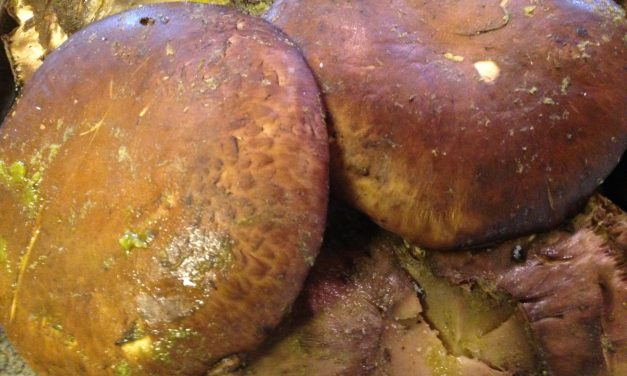 Grilled Portobello Mushroom Steak