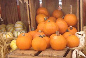 pumpkin sugarpie