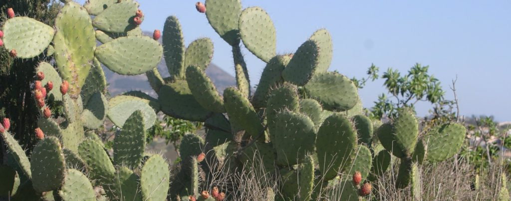 Fearless Cooking with Nopal Cactus | Kitchen Shaman