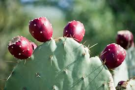 Fearless Cooking with Nopal Cactus